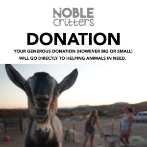 NOBLE CRITTERS DONATION - CLICK TO SELECT AMOUNT! Thumbnail